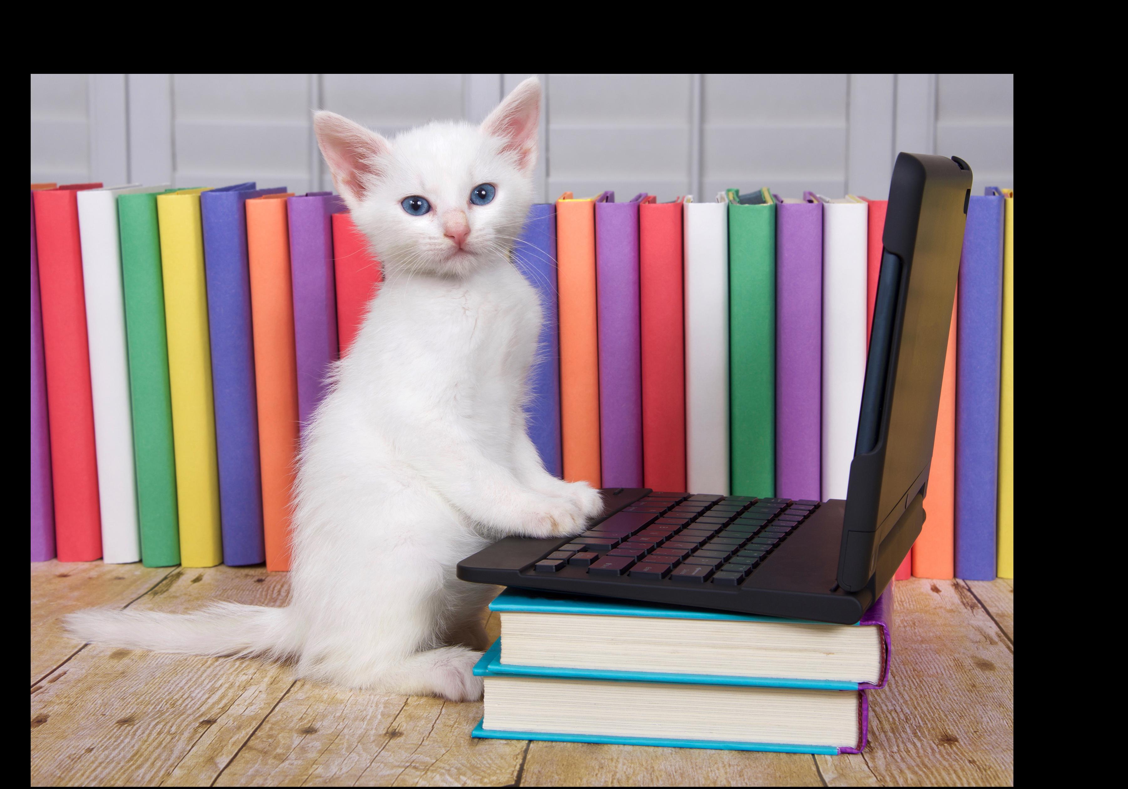 Book Branders typecat-4 Web Services